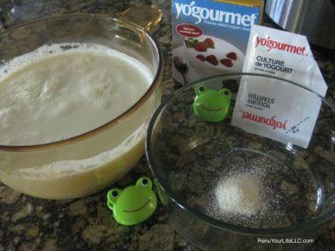 IMG_7488-yogurt-starter-Optm