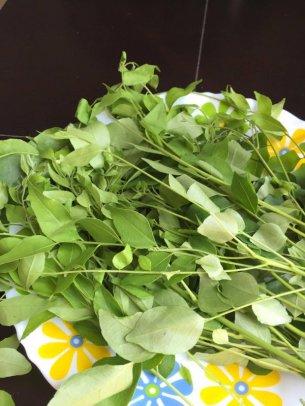 sweet-neem-leaves-optm